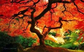 autumn-equinox-4